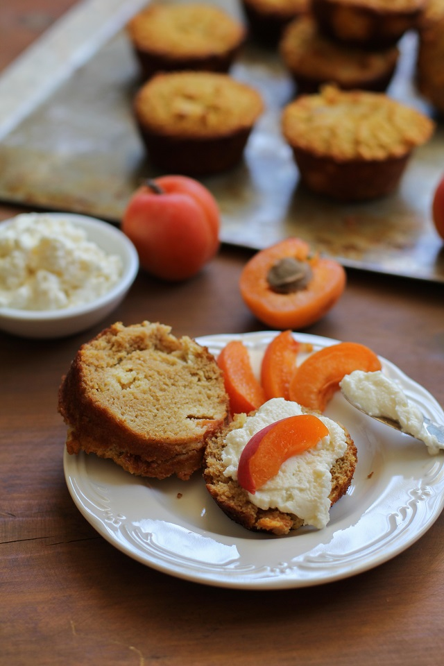 Grain-Free Apricot Ricotta Muffins made with coconut flour and honey - refined sugar-free and healthy! | theroastedroot.net #dessert #breakfast #glutenfree #recipe
