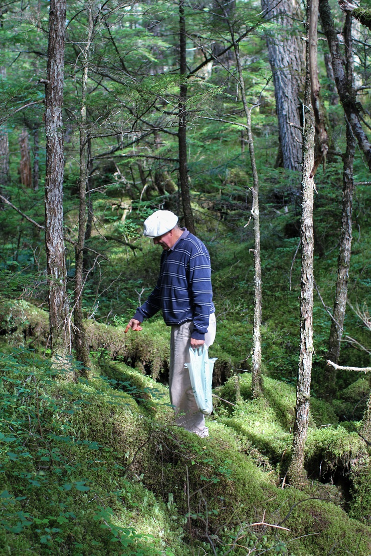 Foraging for mushrooms in Cordova, AK #travel