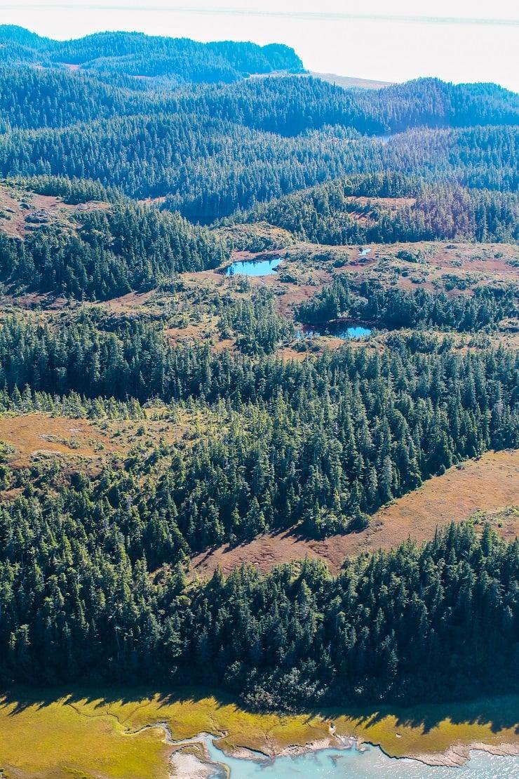 Cordova, Alaska #travel