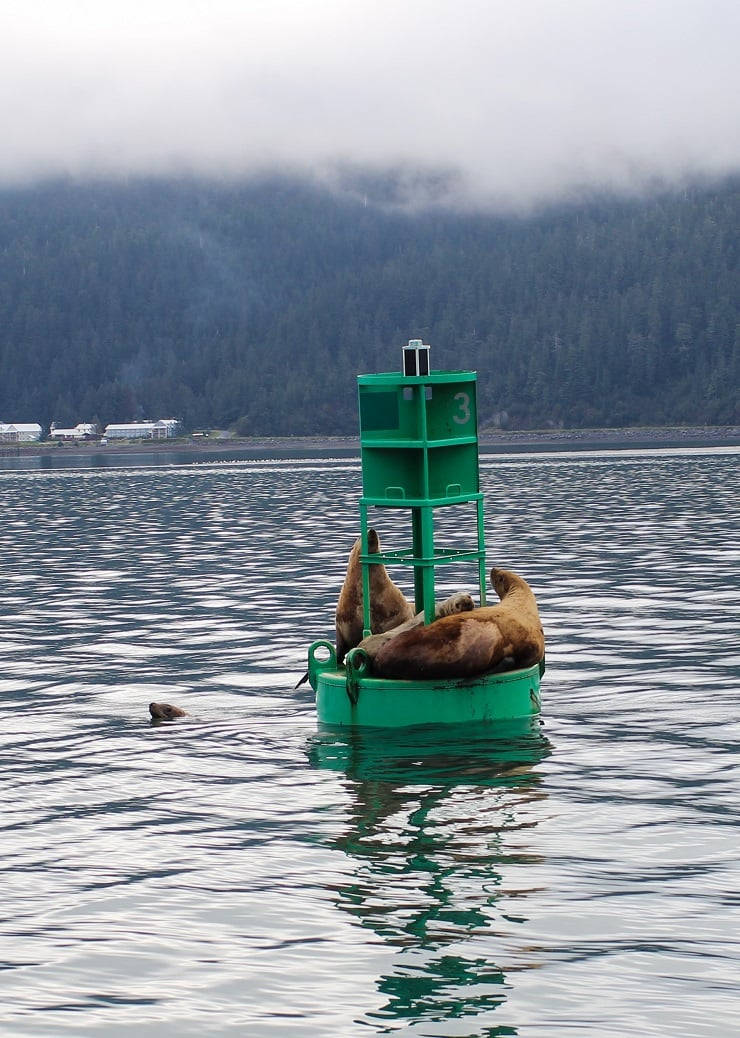 Sea Lions on a buoy off the coast of Cordova, Alaska